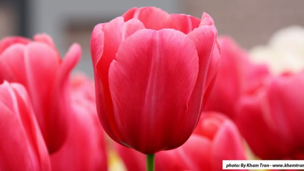 Op-ed - Tramping Through the Tulips with Blodget