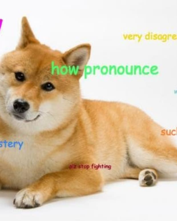 Op-ed - DogeParty: Calling All Shibes