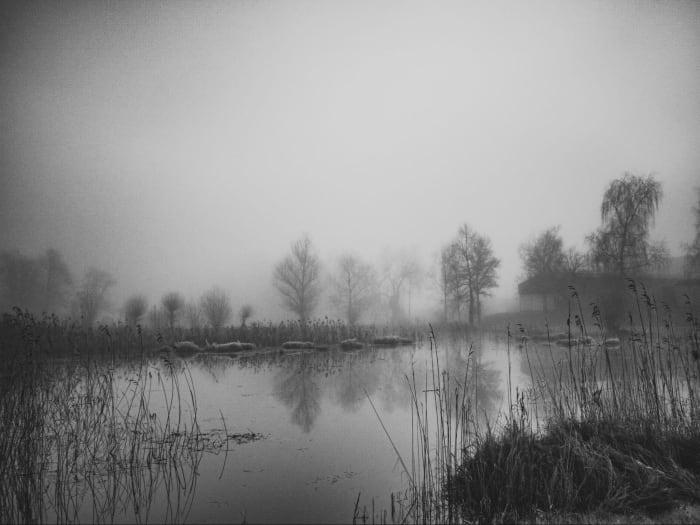 Wetland drainage.  Via Yves Moret at Unsplash