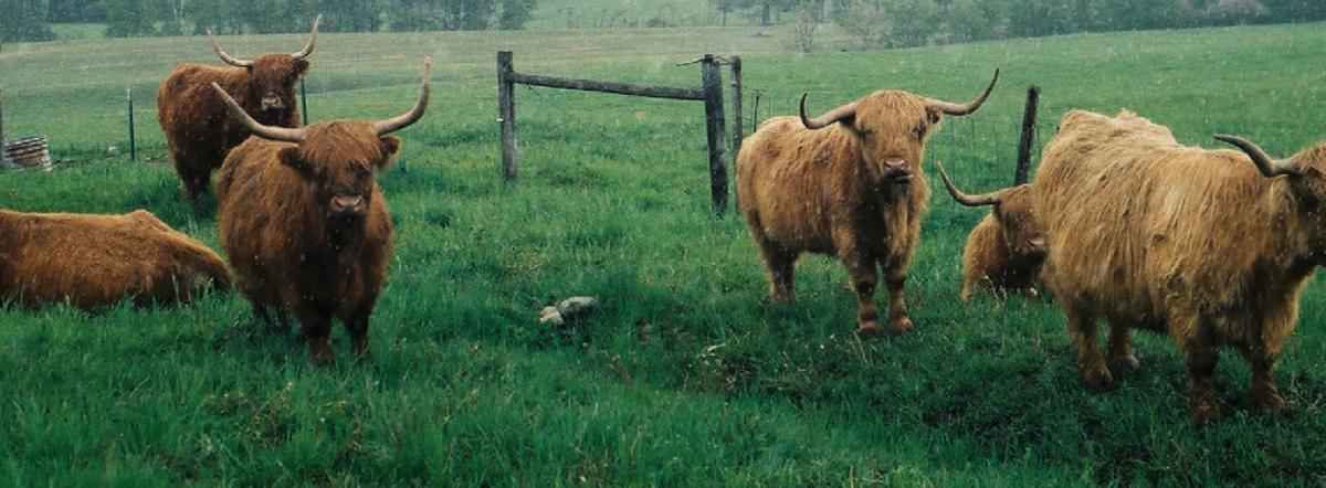 grasshillbeef