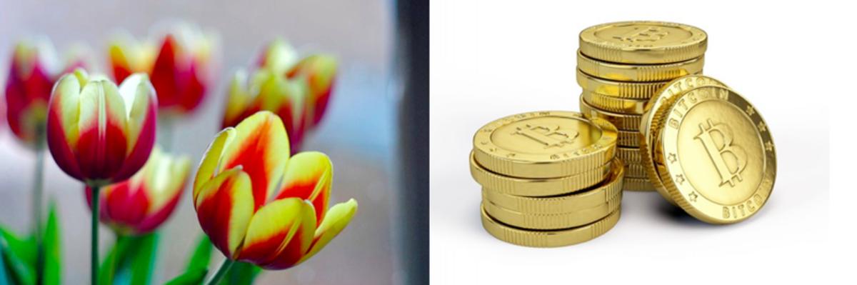 Op-ed - Tulip Mania Vs. Bitcoin